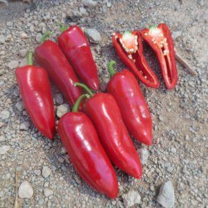 Sweet Bite Mini Peppers